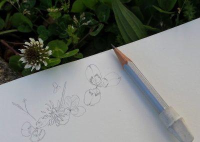 botanical art creative process stephey