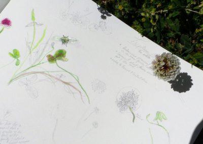 botanical art creative process