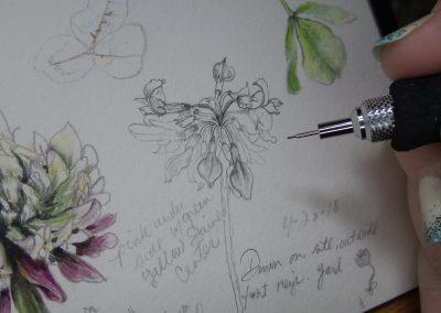 botanical artist stephey baker 04