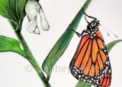 botanical artist stephey baker butterfly