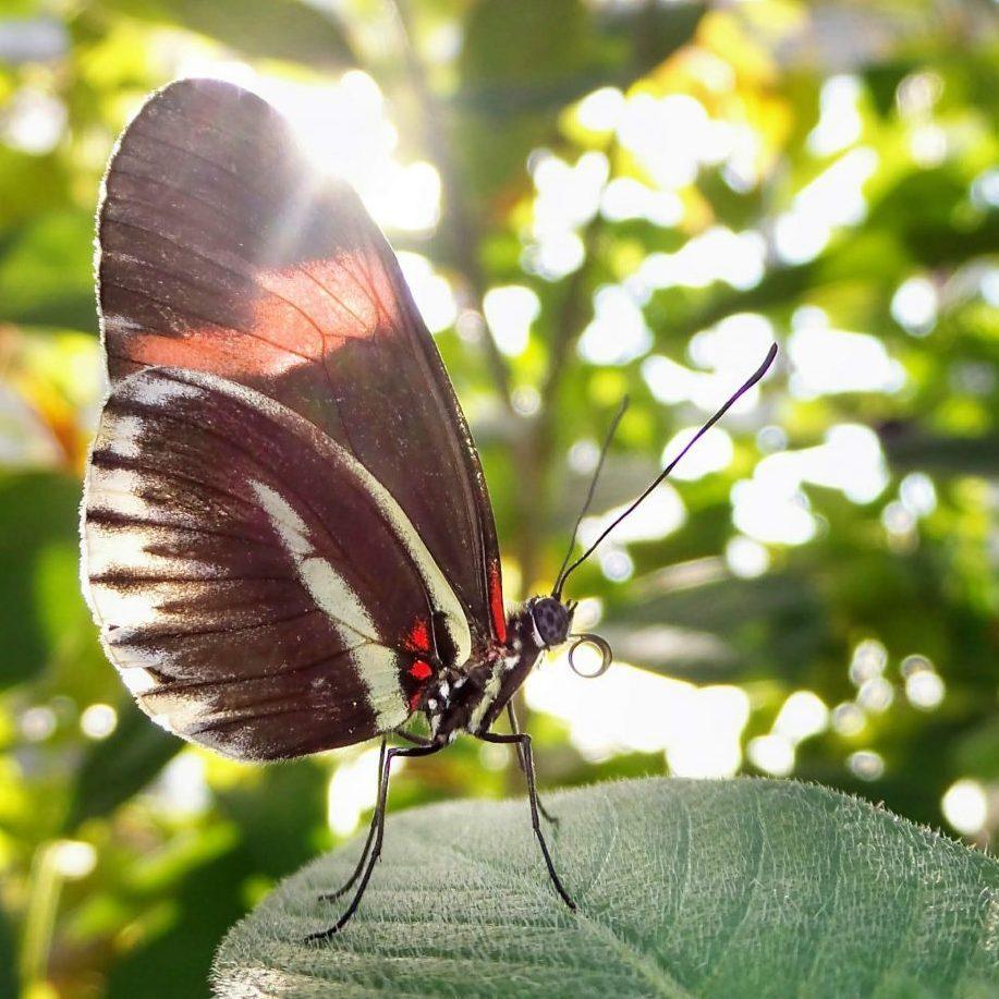 butterfly botanical artist stephey