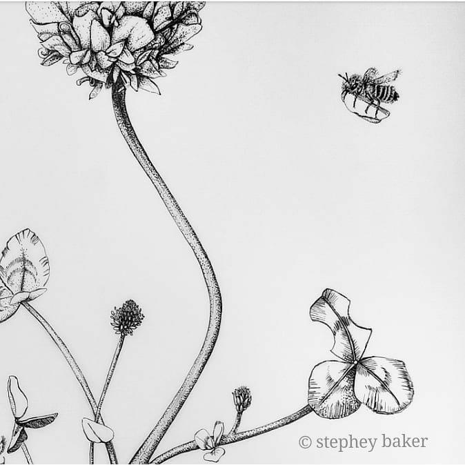 botanical artist stephey clover