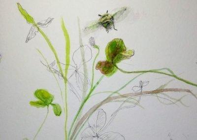 botanical artist stephey clover10.jpg