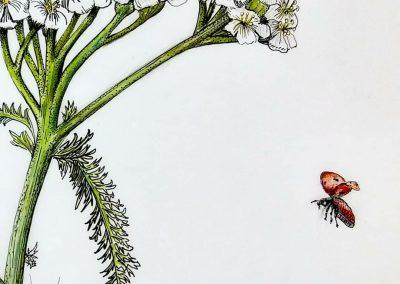 botanical art yarrow ladybug