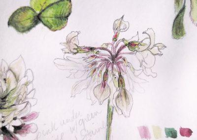 botanical sketchbook stephey baker