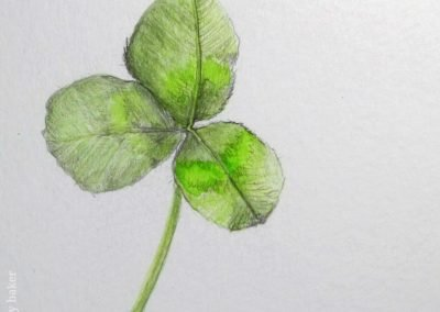 botanical sketchbook stephey clover16