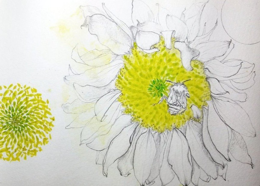 botanical illustration tutoring