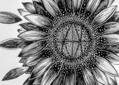 pollinator garden sunflower